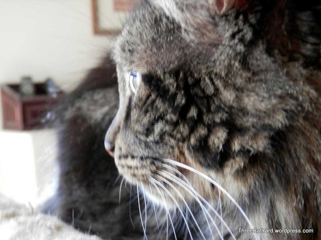 cat lice treatment