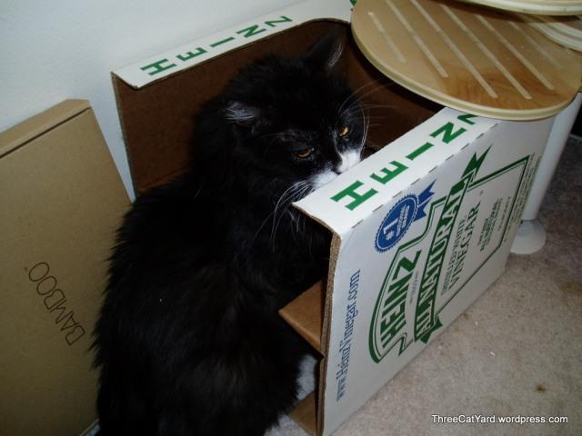 Gus vs Carboard Box