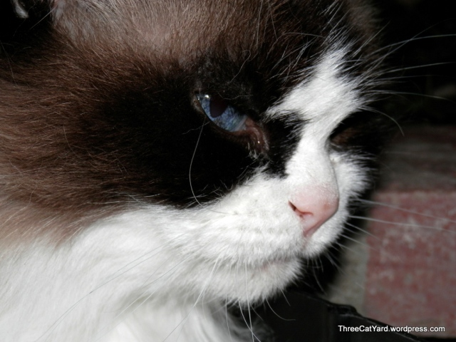 Calla has her eye on You