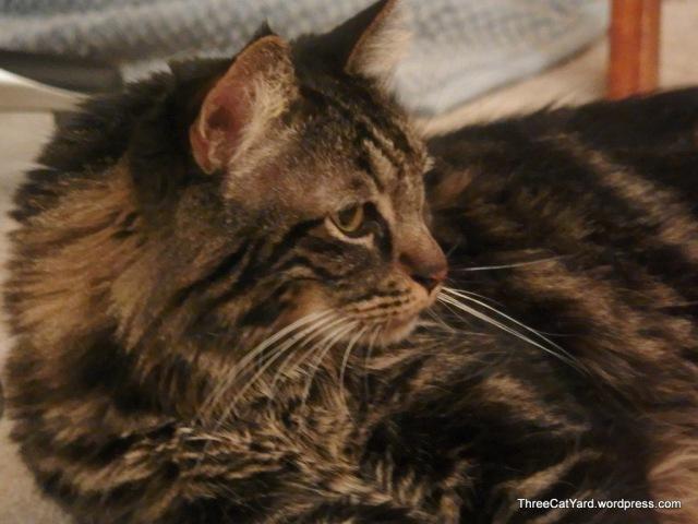 Julius watches Kittens
