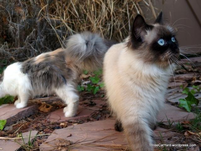 Kitten Strut 2