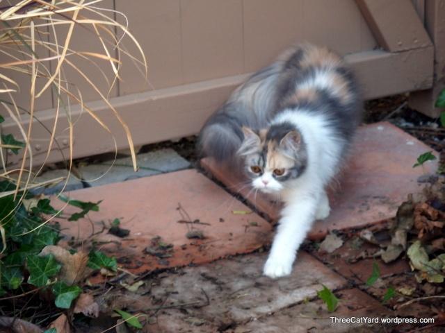 Kitten Strut