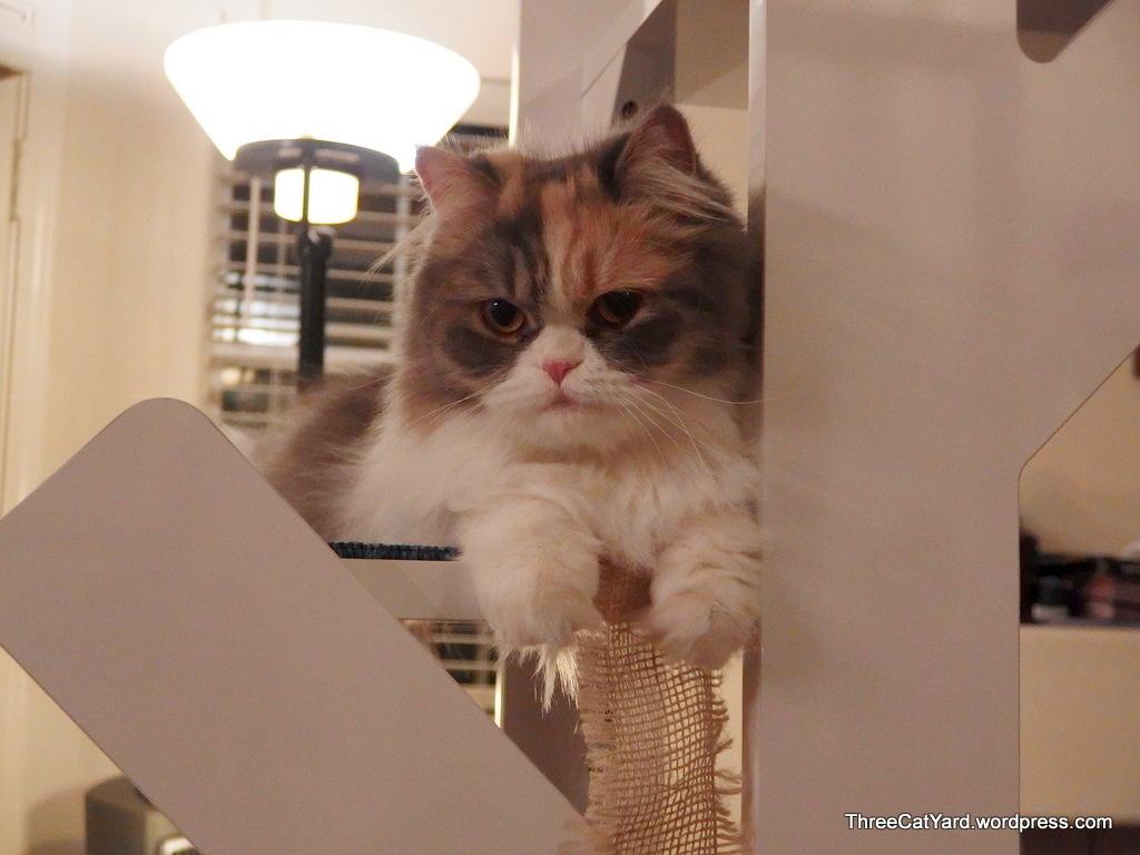 Top Cat   ThreeCatYard