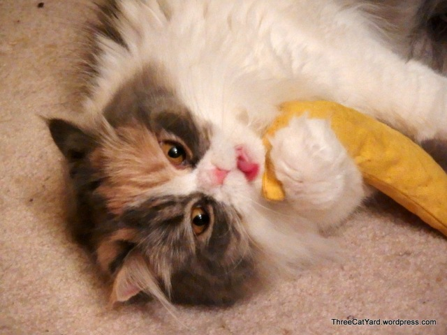 Kitten Tongue