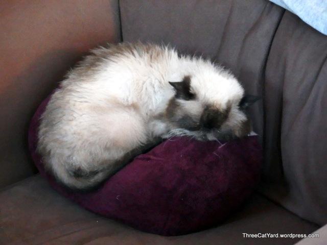 Pillow Perch
