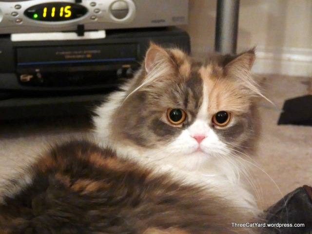 Surprised Girl Rhea