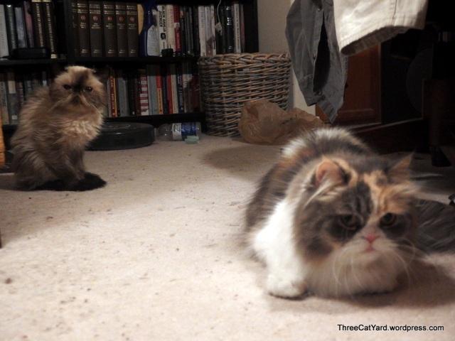 Kitties watching