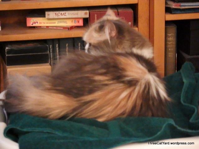 Rhea Calms Down