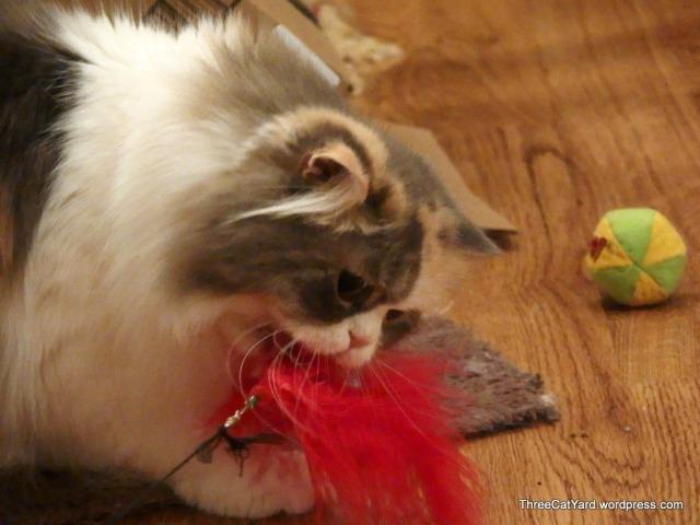 Rhea takes a Bite