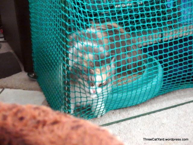 Kitten behind Netting