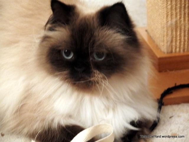 Cat of Inteest