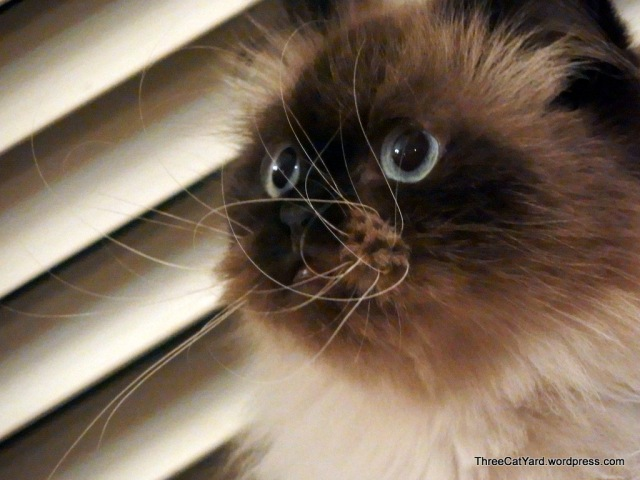 Whisker View
