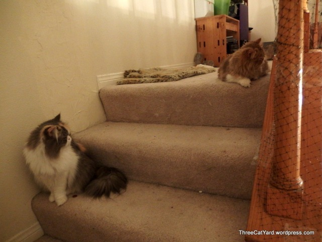 Stair Cats
