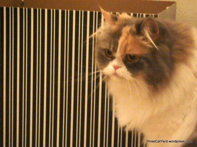 Rhea Observes