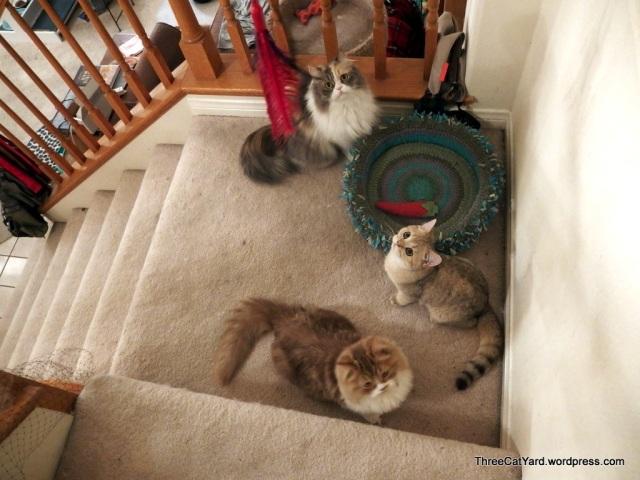 Three Cat Landing