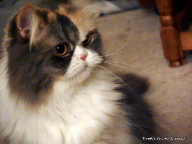Pretty Rhea