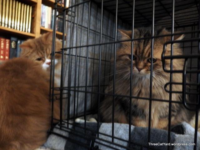 Anna in Jail