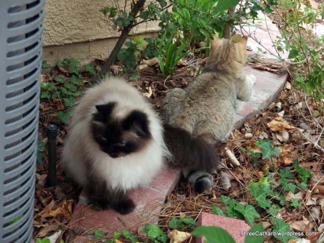 Boys in the Yard